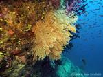 After Winston: Assessing Coral Reefs for Cyclone Damage and Coral Bleaching